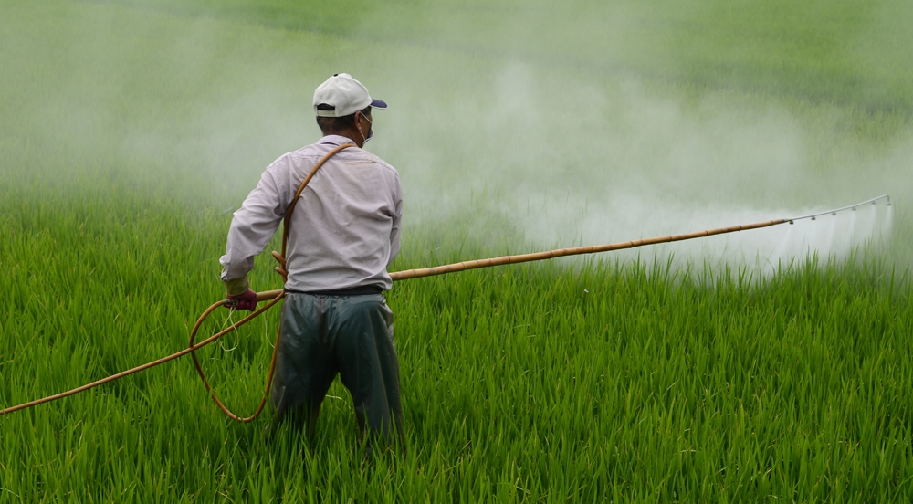 lawn pesticides and chemicals essay Effects of pesticides essaystoday, the use of pesticides has increased dramatically because of the growing population and the demands this population the high increase in population means more food must be produced and spreading of diseases is more likely.