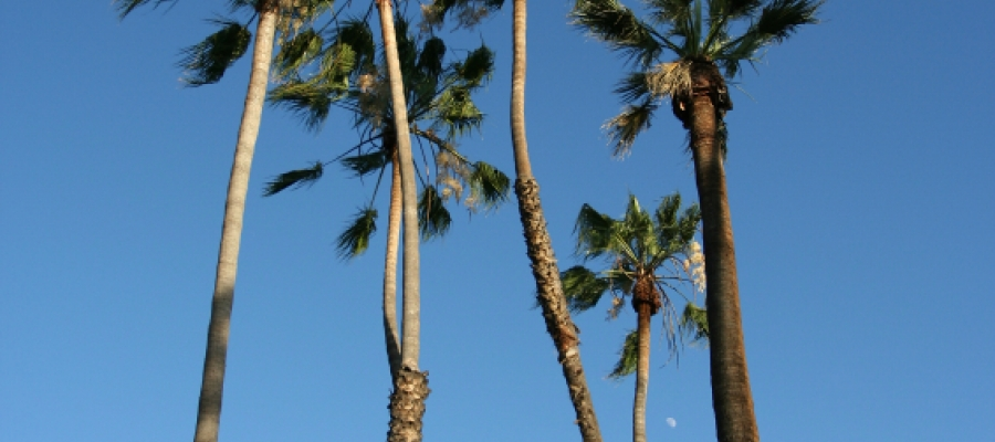 palm trees against a bright blue sky
